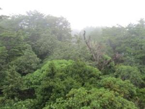 Tongariro_0119