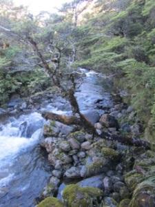 Tongariro_0184