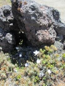 Tongariro_0290